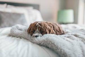 choose a mattress-547375-edited